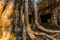 Ta Prohm (Ancestor of Brahma) is the modern name of the temple at Angkor, Siem Reap Province, Cambodia, built in the Bayon style largely in the late 12th and early 13th centuries and originally called Rajavihara . Located approximately one kilometre east of Angkor Thom and on the southern edge of the East Baray, it was founded by the Khmer King Jayavarman VII as a Mahayana Buddhist monastery and university. Unlike most Angkorian temples, Ta Prohm is in much the same condition in which it was found: the photogenic and atmospheric combination of trees growing out of the ruins and the jungle surroundings have made it one of Angkor's most popular temples with visitors.