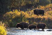 National Bison Range, Montana.