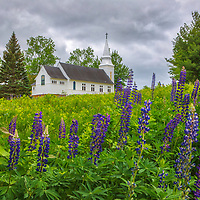 New England photography of the historic white steeple St. Matthew's Chapel and Lupine blooms in Sugar Hill, New Hampshire.<br /> <br /> Beautiful New Hampshire fine art photography of blooming lupines at St. Matthew's Chapel in Sugar Hill are available as museum quality photography prints, canvas prints, acrylic prints, wood prints or metal prints. Fine art prints may be framed and matted to the individual liking and interior design decorating needs:<br /> <br /> https://juergen-roth.pixels.com/featured/new-hampshire-sugar-hill-lupines-juergen-roth.html<br /> <br /> Good light and happy photo making!<br /> <br /> My best,<br /> <br /> Juergen