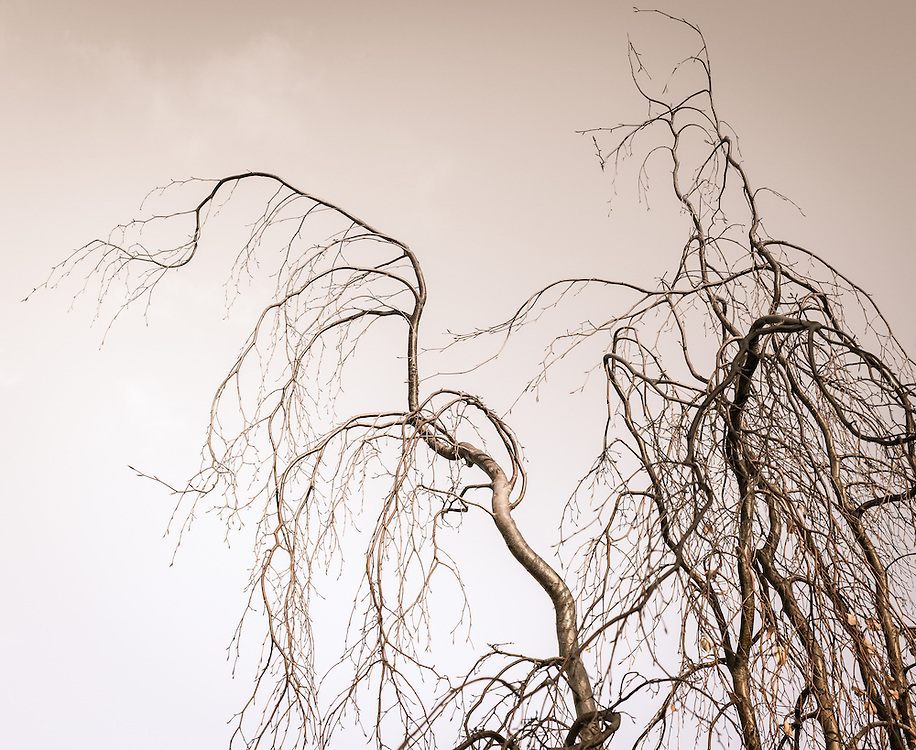 http://Duncan.co/bent-branches