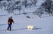 Skier and dog, in snowy landscape, walking, skiing,