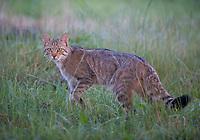 Wildlife in Moldova