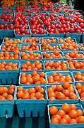 Turquoise boxes of bright orange and red cherry tomatoes, Common Ground Fair organic farmers market, Unity Maine.