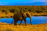 Elephant back safari, Camp Jabulani, Kapama Private Game Reserve, near Kruger National Park, South Africa