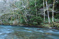 Scenic image of the North Fork of the Nehalem River, Oregon.