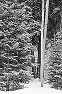 Winter scene, Grand Mesa CO