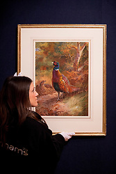 © Licensed to London News Pictures. 15/01/2013. London, UK. A Bonhams employee adjusts 'Cock and Hen Pheasant in a Woodland Clearing' (Est. GB£30,000 - 50,000), a watercolour by British artist Archibald Thorburn, at an auction press view held today (15/01/13) at Bonhams in New Oxford Street, London. The auction, entitled '19th Century Paintings, Drawings and Watercolours', will take place on the 23rd of January at Bonhams' 101 New Bond Street Premisses. Photo credit: Matt Cetti-Roberts/LNP