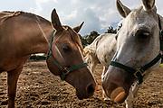 ITALY, Franciacorta area, Erbusco, stable Crazy Horse