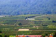 vineyard steinert grand cru pfaffenheim alsace france