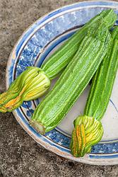 Courgette 'Romanesco'. Zucchini