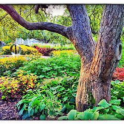"""The garden at Prescott Park in Portsmouth, New Hampshire. iPhone photo - suitable for print reproduction up to 8"""" x 12""""."""