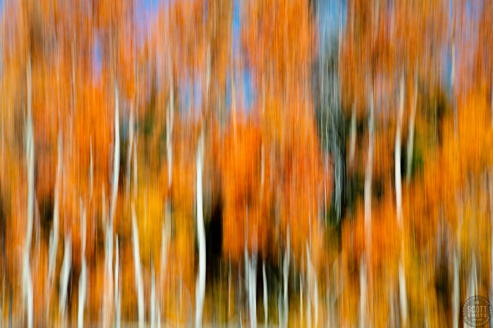"""""""Autumn Abstract 5"""" - Photograph of Aspen trees at Paige Meadows, near Lake Tahoe in the fall. The abstract effect is achieved by intentional camera movement while hand holding the camera."""