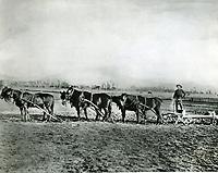 1905 Dennis Sullivan plowing his fields at Vermont near Santa Monica Blvd.