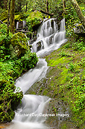 66745-04804 Waterfall along the  Middle Prong Little River in spring Great Smoky Mountains National Park TN