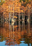 Cypress Reflection 1