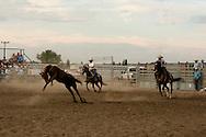 Will James Roundup, Ranch Rodeo, Wild Horse Roping, Jake Hahn, Chris Hatch, Hardin, Montana.