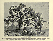 ABRAHAM'S OAK, HEBRON. An ilex or evergreen holm oak (quercus pseudo-coccifera). One of the lower branches was broken down by a heavy fall of snow in the winter of 1850. It was cut up into logs and conveyed to Jerusalem; there were seven camel-loads; one log was sent to England. Wood engraving of from 'Picturesque Palestine, Sinai and Egypt' by Wilson, Charles William, Sir, 1836-1905; Lane-Poole, Stanley, 1854-1931 Volume 3. Published in by J. S. Virtue and Co 1883