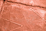 PERU, NAZCA CULTURE Nazca lines, 200AD-800AD; huge drawings in the desert on the south coast of Peru; aerial view of giant scorpion spider