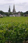 Vineyard. The Savennieres church. Savennieres, Anjou, Loire, France
