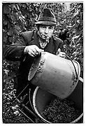 vineyard worker, Mosel, Germany