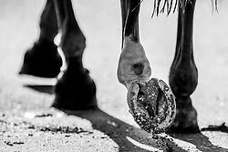 Hoofs<br /> CSIO La Baule 2021<br /> © Hippo Foto - Dirk Caremans<br />  12/06/2021