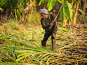 09 FEBRUARY 2015 - THA MAI, KANCHANABURI, THAILAND: Workers harvest sugarcane by hand in a field in Kanchanaburi, Thailand. First they burn weeds and loose chaff out of the field before going through it with machetes and scythes to cut the stalks of sugarcane. Thailand is the world's second leading sugar exporter after Brazil. The 2015 sugarcane harvest in Thailand is expected to fall about 5% compared to the 2014 harvest because of a continuing drought in Southeast Asia. Brazilian production is also expected to fall this year because of ongoing drought in Brazil. Australia, the number 3 sugar exporter, is also expected to see a smaller harvest this year because of continuing draught in Australia.   PHOTO BY JACK KURTZ