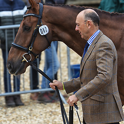 Bill Levett Badminton Horse trials Gloucester England May 2019, Bill Levett equestrian, eventing riding Lassban Diamond Sky at the Badminton horse trials May 2019 Badminton Horse trials 2019 Winner Piggy French wins the title