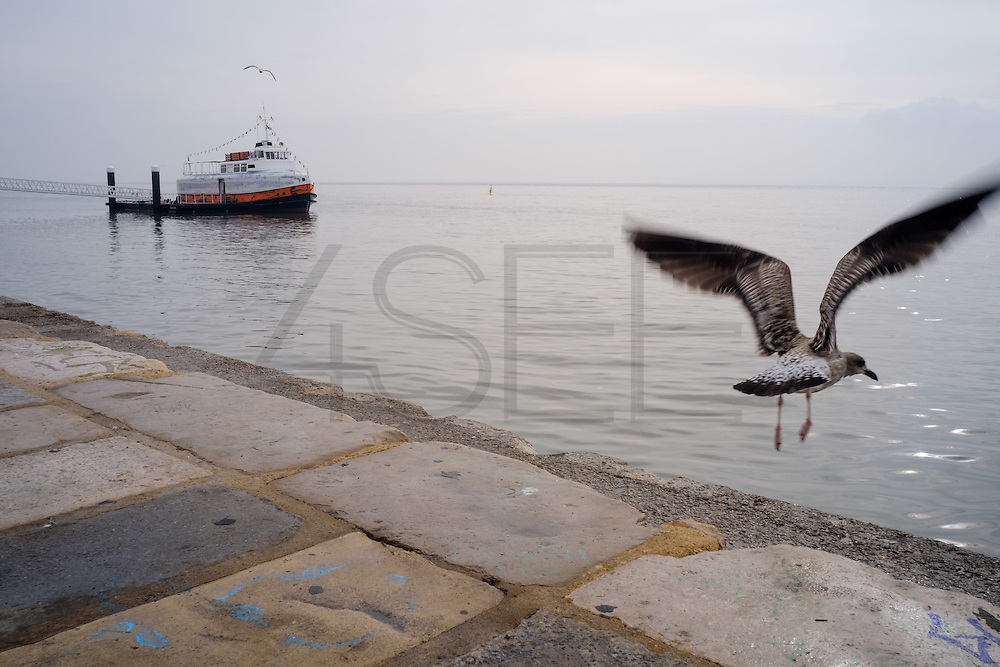 "A seagull starts its fly by Tagus river, with a typical ""cacilheiro"" ship in the distance."