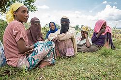 Farmers work on a coffee co-op in Debello in the Limu region of Ethiopia.