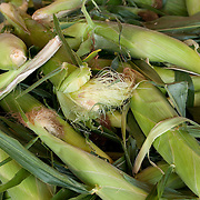 Fresh corn for sale at a farmstand in Concord, MA, USA