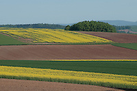 Feld-Landschaft in Süd-Niedersachsen im Frühsommer. Leuchtend gelber Raps, Getreide wie Gerste, Weizen und Roggen und andere Feldfrüchte sorgen für einen wahren Farbenrausch. Allerdings nur da, wo noch die traditionelle Fruchtfolge betrieben wird. | Field-landscape in the south of Lower-Saxony in early summer. Rape, grains like wheat and rye and other plants offer plenty of colours, but only where crop rotation is still executed.