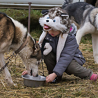 Girl in a dog shaped hat feeds her dog during the FISTC Dog Cart European Championships in Venek (about 136 km Norht-West of capital city Budapest), Hungary on November 22, 2014. ATTILA VOLGYI
