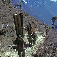 NEPAL, HIMALAYA. Porters carry house beams to village in Khumbu, a cause of deforestation of Sherpa homeland & Sagarmatha National Park.  Mt. Thamserku bkg.