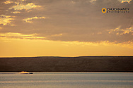 Fisihing boat races along at sunrise on Fort Peck Reservoir near Fort Peck, Montana, USA