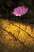 Fungi<br /> Mapari<br /> Rupununi<br /> GUYANA<br /> South America