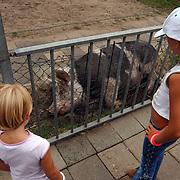 Open dag kinderboerderij de Hertenkamp Hilversum, kinderen met varken
