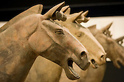 Horses from Terracotta Army on display in the Shaanxi History Museum, Xian, China