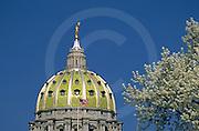 PA Capitol Dome, Joseph Huston, Architect, Harrisburg, PA, Spring Flowering Tree