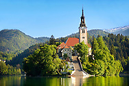 Picture image photo of Bled Island (Blejski otok) which has several buildings, the main one being the pilgrimage church dedicated to the Assumption of Mary (Cerkev Marijinega vnebovzetja), built in its current form near the end of the 17th century, and decorated with remains of Gothic frescos from around 1470 in the presbyterium. The church has a 52 m (171 ft) tower and there is a Baroque stairway dating from 1655 with 99 stone steps leading up to the building. Slovenia.<br /> <br /> Visit our PHOTO COLLECTIONS OF SLOVANIAN  HISTOIC PLACES for more photos to download or buy as wall art prints https://funkystock.photoshelter.com/gallery-collection/Pictures-Images-of-Slovenia-Photos-of-Slovenian-Historic-Landmark-Sites/C0000_BlKhcYWnT4Sites/C0000qxA2zGFjd_k