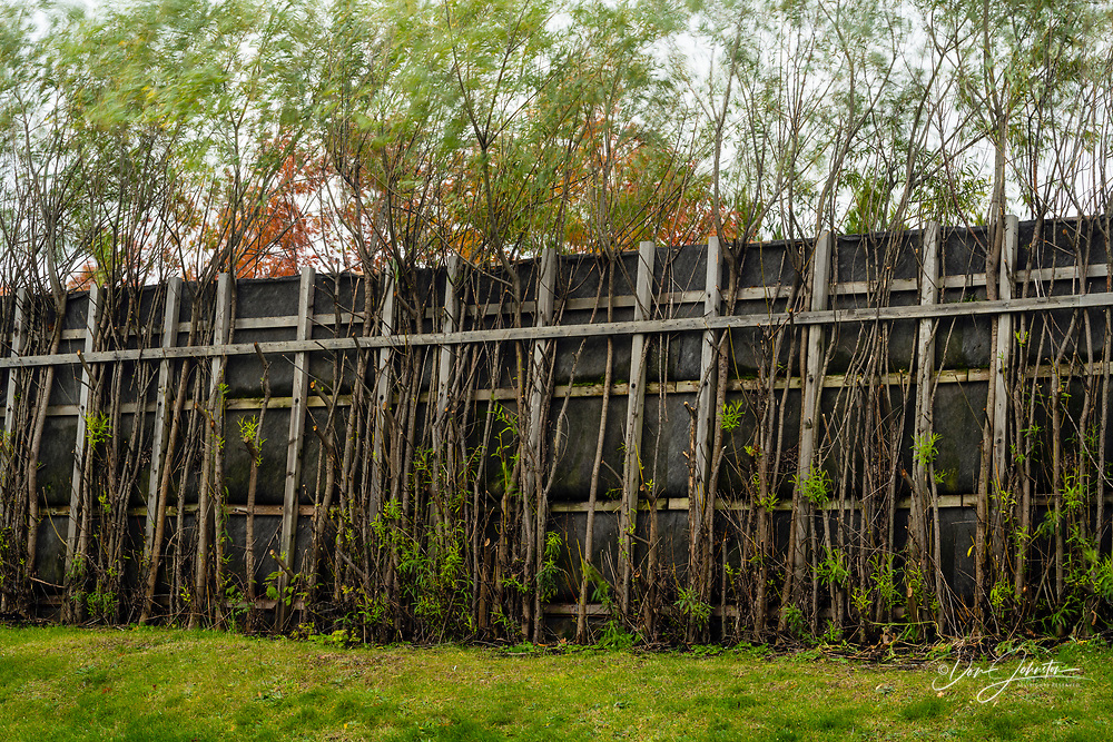 The 'Living Wall'- An industrial sound barrier fence in a residential neighbourhood, made from living trees, near a mining complex., Greater Sudbury- Falconbridge, Ontario, Canada