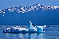 An iceberg floating in the waters of Holkham Bay below the Coast Mountains,  Southeast Alaska.  The blue color is created by the thickness, density and the internal alignment of the large ice crystals, which causes greater refraction of light and absorbs the red spectrum.  Therefore, the visible light is blue or blue-green.