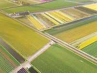 Amazing aerial view of colorful blossoming fields of tulips at sunset in Lisse, Netherlands