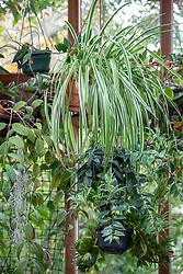 Houseplants in a conservatory