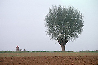 Po River Valley near Parma, Italy --- Lone Tree in a Field --- Image by © Owen Franken