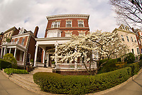 Houses along Monument Avenue (historic district), Richmond, Virginia USA