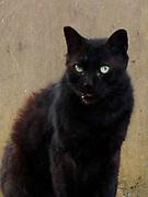 Pirata / Gato negro / Ciudad de Panamá.
