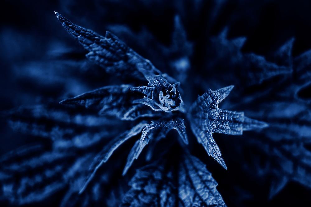 A Blue Macro Of Some Wild Foliage/Vegetation