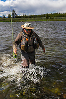 A fly fisherman splashes through the water as he wades toward the shore on Montana's Madison River.