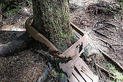 A tree grows through a loop of old rusted iron, in Wallace Falls State Park, Gold Bar, Washington, USA.