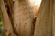 Arabic grafitti on plant Kitchener's Island, Aswan, Egypt